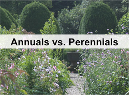 Perennials Vs Annuals The Great Debate Juniper Landscape