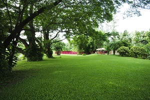 Find Out Why You Should Aerate Your Lawn