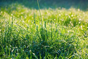 Find Out How To Select a Lawn Care Maintenance Provider
