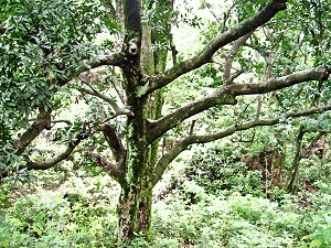Find Out How Trees Talk