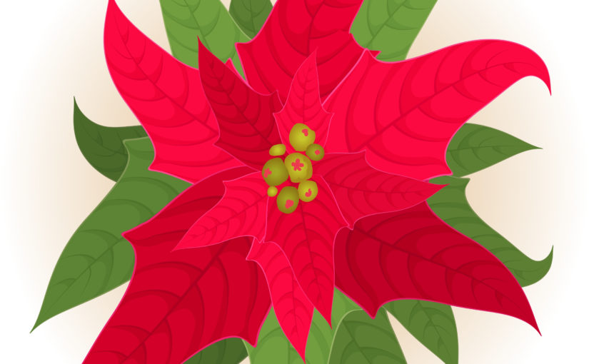 How To Keep Your Poinsettia Looking Brilliant Year Round