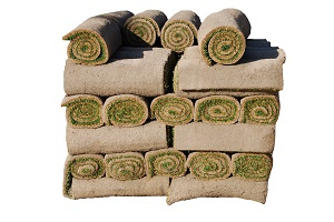 Find Out How Sod Gives Immediate Results